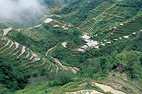Banaue rice terraces, Philippines  click to enlarge  file size