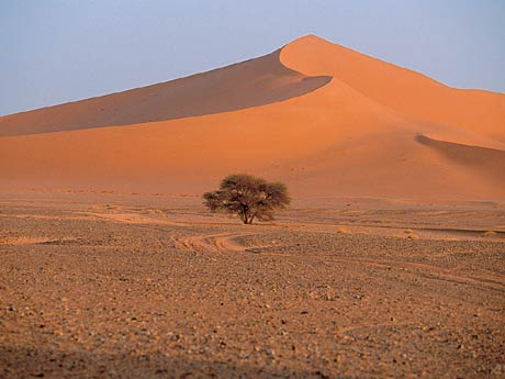 Sahara - On the Libyan Border, Algeria.